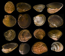 shells collection - shells isolated on a black