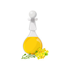 Glass bottle of rapeseed food oil, organic healthy oil product cartoon vector Illustration