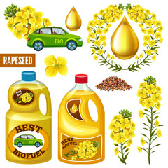 Set of seeds and rape flowers, canola oil. Brassica napus. Biofuel from rape save planet. Isolated vector illustration  on white background.