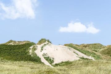 Beach dunes on a Scandinavian coast in the summer