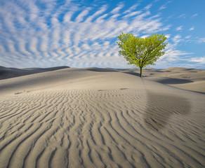 vision of hope, green tree in the desert