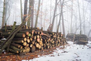 Skład drewna w lesie. Zimowa sceneria
