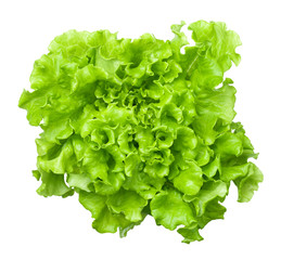 Lettuce Salad Head Isolated on White Background