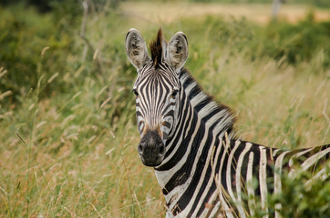 South Africa Safari Animal