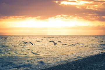 Three seagulls fly along the coastline of the beach on the background of a beautiful sunset. Toned image