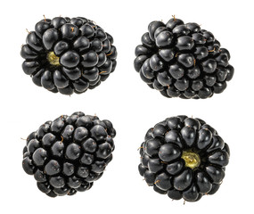 blackberry fruit isolated without shadow