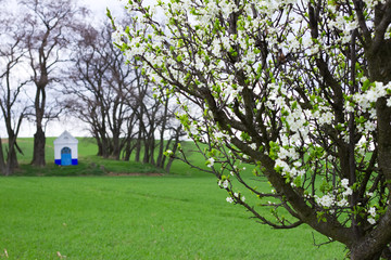 Blooming plum tree. Santa Barbara chapel landscape at spring in background. Religious monument, South Moravia, Czech Republic.