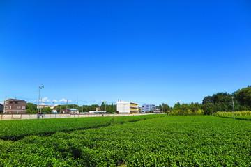 青空と茶畑の風景2