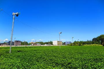 青空と茶畑の風景1