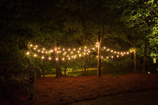 Sparkling lights hanging in the trees