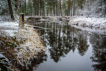 Forest winter flow river lies and strikes the shores of the Siberian taiga