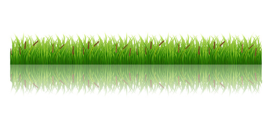 Grass isolated on white green meadow nature vector image