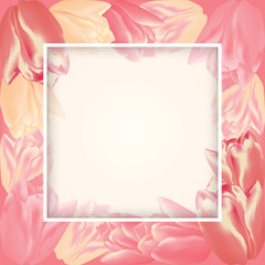 Vector greeting card template with tulip flowers and translucent square frame. Realistic meshes petals. For mother's day, women's day or st.valentine's day design