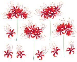 日本的な彼岸花,