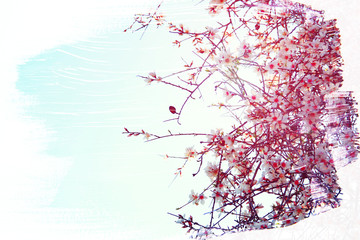 dreamy and abstract image of cherry tree. double exposure effect with watercolor brush stroke texture.