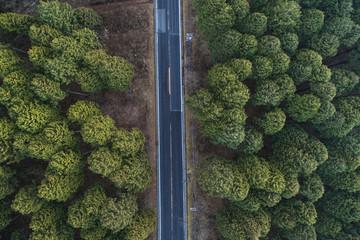 真俯瞰の林道