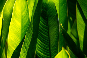 Abstract background green leaves and texture