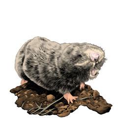 mole sketch vector graphics color picture