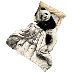 Panda lies on a pillow under a blanket sketch vector graphics color picture