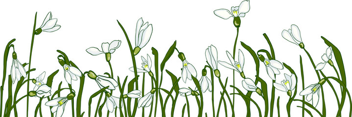 Fresh snowdrops on a gray background with space for text. Card with the first spring flowers. Vector illustration of graphic snowdrops.