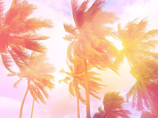 Toned palm trees background