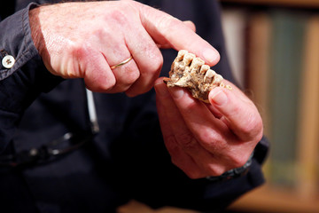 Prof. Israel Hershkovitz holds a partial jaw bone bearing seven teeth, what scientists are calling the oldest-known Homo sapiens remains outside Africa, in Tel Aviv