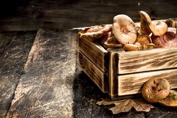 Fresh mushrooms in a box.