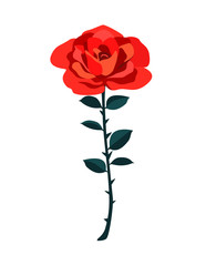 Beautiful red rose isolated on white background. Gorgeous flower in vector. Cute wedding illustration and Valentine's Day card