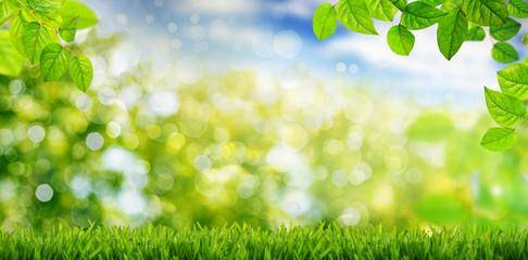 Landschaft im Frühling und Sommer, Wiese Blätter