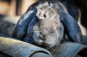 wild rabbit close up view