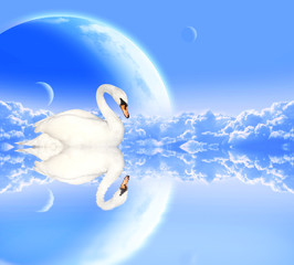 Mute swan on blue background with planets
