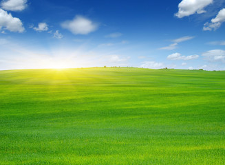 Fotomurales - Green field and sun.