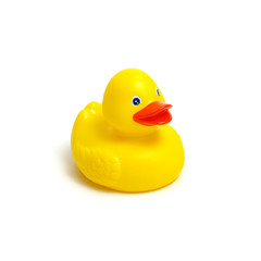 Yellow rubber duck on white