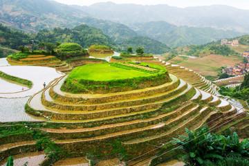 Terraced rice field stunning scenery