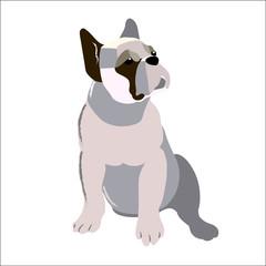 The bulldog isolated on white background, vector illustration dog.