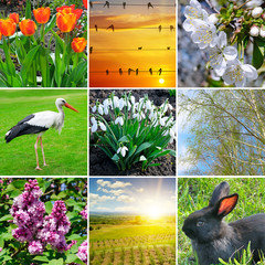 Spring collage. Flowering flowers, trees and migratory birds.