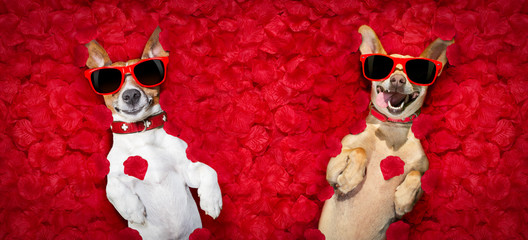 valentines couple of dogs   with  rose petals