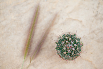 cactus and grass flower