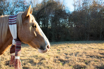 Horse wearing a scarf