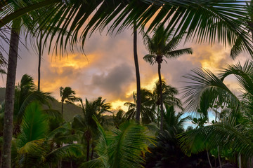 Palm Trees View at Sunset After the Rain