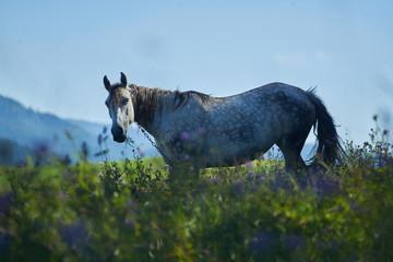 horse portrait in nature