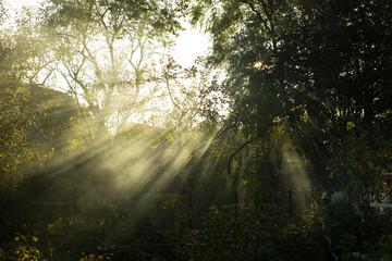 Sunn Forest