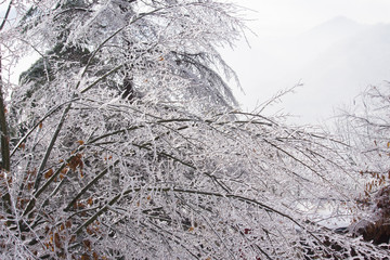 Frozen Tree,Leaves and Flowers on Ice Storm
