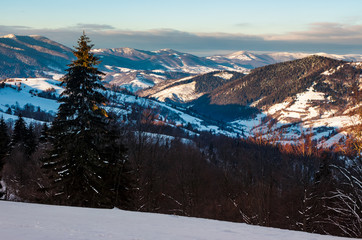 forested hills of Carpathian mountains in winter