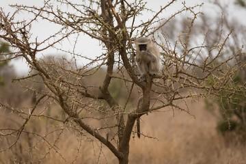 Monkey relaxing on tree