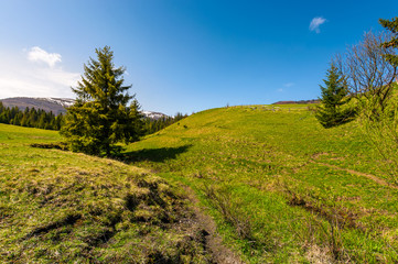 path along the grassy slope in forested area