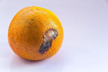 An orange mandarin with a mold ulcer on a white background. Citrus Fruit is rotten. Copy space. Close-up.