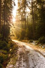 Einige Sonnenstrahlen scheinen durch die Bäume in den Wäldern der Sächsischen Schweiz