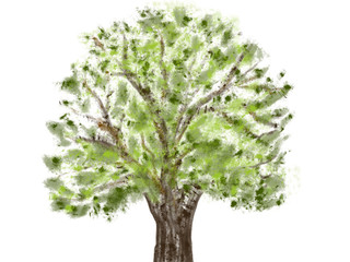 Colorful hand drawn abstract view of oak tree without bird nest on white background, isolated cartoon illustration of spring tree painted by watercolor and pencil paper chalk, high quality