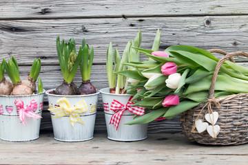 Tulpen im Weidenkorb mit Blumenzwiebeln Hyazinthe rustikal im Frühling vor Holzhintergrund